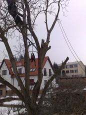 Petrovo malování - kácení stromů 01