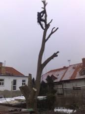 Petrovo malování - kácení stromů 04